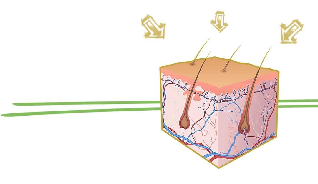 Hajhullás elleni vitaminok - mire van szüksége a hajnak?